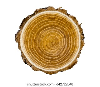 Big tree trunk slice cut from the woods. Textured surface with rings and cracks. Neutral brown background made of hardwood from the forest.