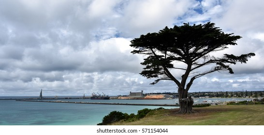 Big tree in the Vested Land Park. Portland beach, Lee breakwater and harbour in the background on a cloudy day.