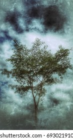 big tree when the strom coming