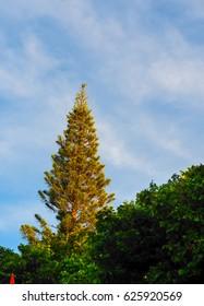Big Tree in the Wood