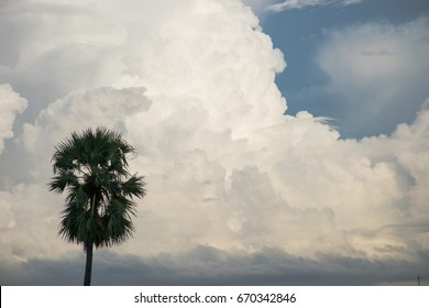 Big tree,Background of storm clouds before a thunder-storm