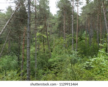 Big trees and green forest