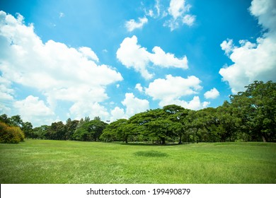 big trees, green grass lawn and blue sky in a park, Thailand