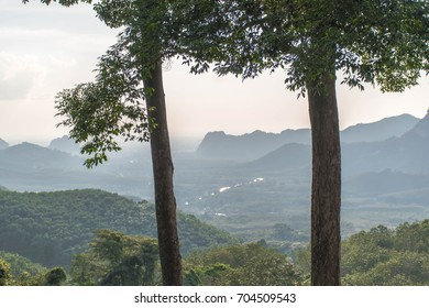 Big trees with landscape of Mountain