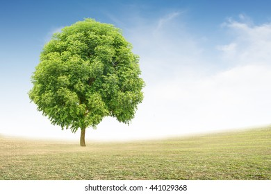 Big trees on the grass Background sky