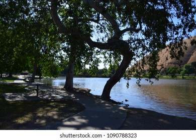 Big trees provide shadow during warm and hot days of spring and summer season in Kern County. Hart Park is a beautiful place near Kern River in Bakersfield, CA.
