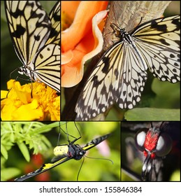 big tropical butterfly sitting on a flower collage