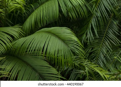 Big tropical jungle leaves