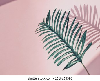 Big tropical leaf isolated on light pink background with sunlight and shadows. Flat lay. Copy space