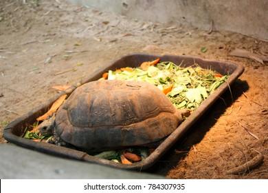 Big turtle on the food