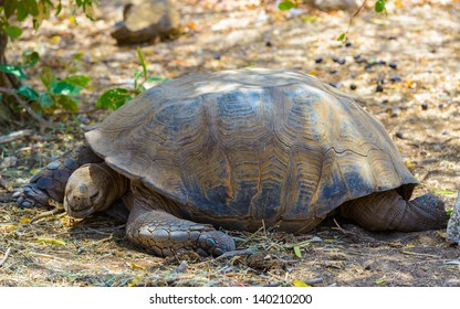 Big turtle on the ground in Africa