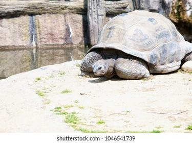Big Turtle sitting on the ground, horizontal image