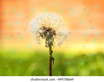 Big white dandelion patterned in stars at sunny weather