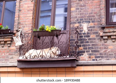 Big white dog lying in a small balcony