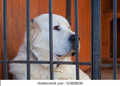 The big white  dog's head behind bar