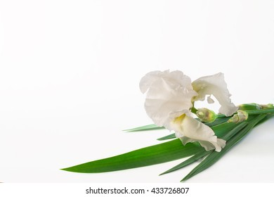 big white flower iris on a white background (not isolate)
