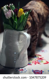 big white glass vase with a handle on a table, full of yellow, pink and white fresh tulips, on a white table cloth, with a beautiful brown ocicat  cat drinking water from it