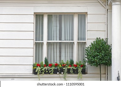 Big Window With Flowers at White House in London