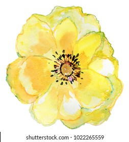 Big yellow flower. Watercolor painting. Beautiful watercolor flower