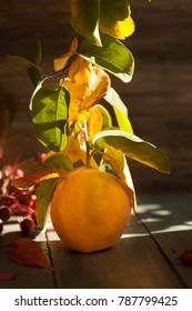 Big Yellow Quince