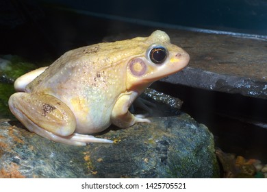 big yellow white frog nature wildlife water environment