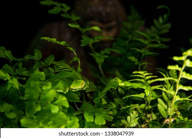 Bigfoot peeking through foliage on a black background with colored gels.