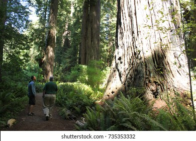 Bigfoot Shadow on Redwood Access Trail - Prairie Creek Redwoods State Park California circa 2013
