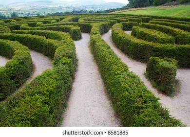 Biggest maze in Europe at Castlewellan, Ireland