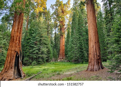 Biggest tree on earth, general Sherman, this Giant sequoia redwood tree stands in Sequoia National Park, California, USA America