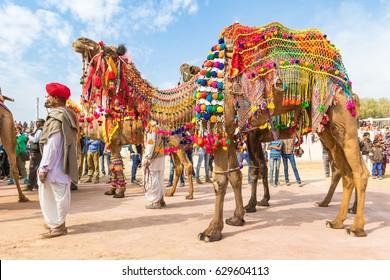 Bikaner, India, 14th January 2017 -  A Rajasthani man with his decorated camel at the Bikaner Camel Mela in Rajastan, India.