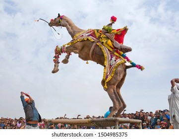 BIKANER, INDIA - JANUARY 12, 2019: Dromedary camel dancing with a flaming torch during annual Camel festival in Rajasthan state