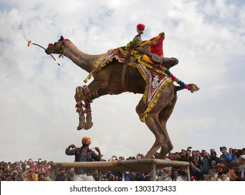 BIKANER, INDIA - JANUARY 13, 2019: Camel dancing with a burning torch during camel festival in Rajasthan state.