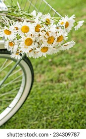 Bike basket full of daisy flowers with room for copy space.