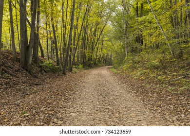 Bike & Hiking Trail In The Woods