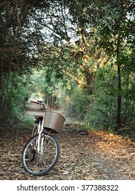 Bike for leisure travel and Light exercise .  ( Focus at basket )