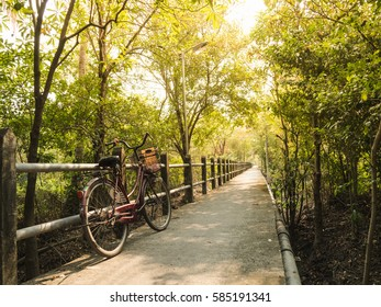 bike in the Long pathway in forest with sunlight in the morning, bike for life