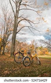 Bike to a park in Autumn. Aomori, Japan