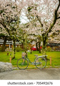 Bike parked in hanami park during cherry blossom season in Kyoto
