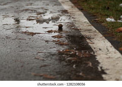 Bike path in the rain in Missoula, MT