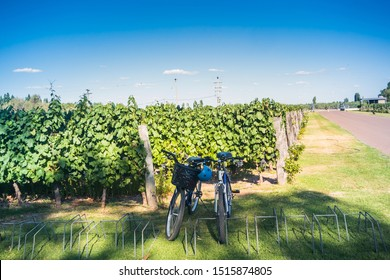 Bike tour at vineyards in the province of Mendoza in Argentina.