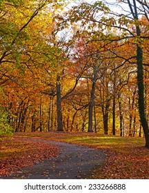 A bike trail along deciduous trees in autumn. Colorful trees foliage in National Arboretum, Washington DC.