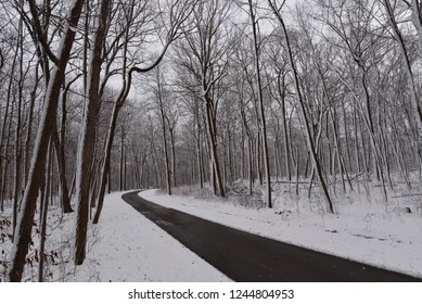 A bike and walking path through the woods on an afternoon just after a major snow storm with the pavement still holding enough heat to keep the snow from sticking on a late autumn day.