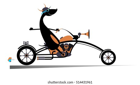 Biker dog. Biker, motorcycle, dog