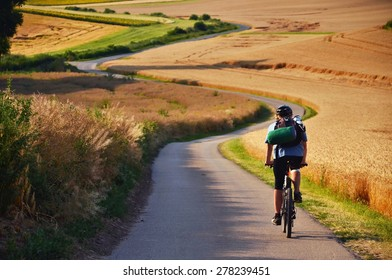 Biker riding on cycling road through summer agricultural fields which are full of gold wheat