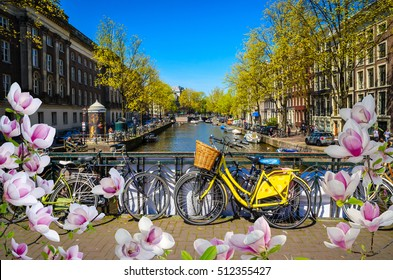 Bikes on the bridge with blooming magnolia spring flowers in Amsterdam, Netherlands. Canals of Amsterdam