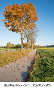 bikeway in autumn along a country road with autumn leaves