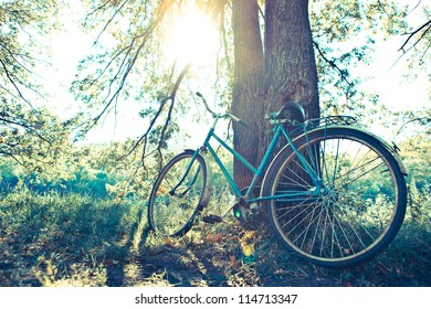 Biking in the forest under the sun.