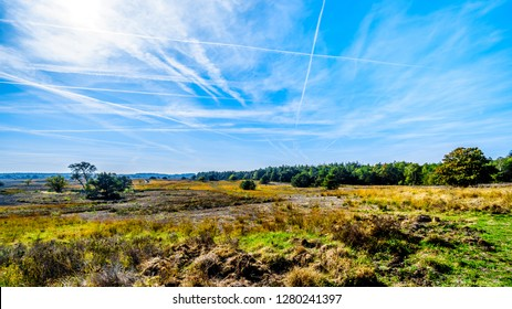 Biking through the heather fields and forests in the Hoge Veluwe nature reserve in Gelderland province in Netherlands