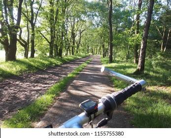Biking through a summer forest