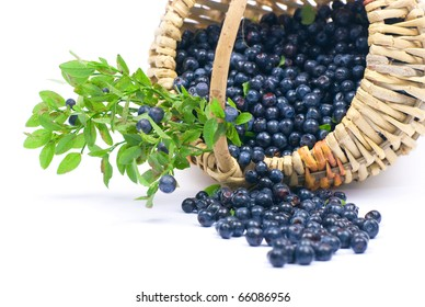 Bilberry in a basket on a white background